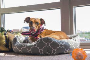 dogbed - kiss dog training