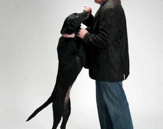 Lexi Mike Kiss Dog Training