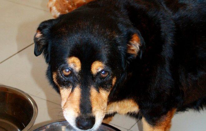 dog food bowl - Kiss Dog Training