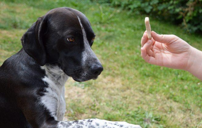 Kiss dog training Treat Training