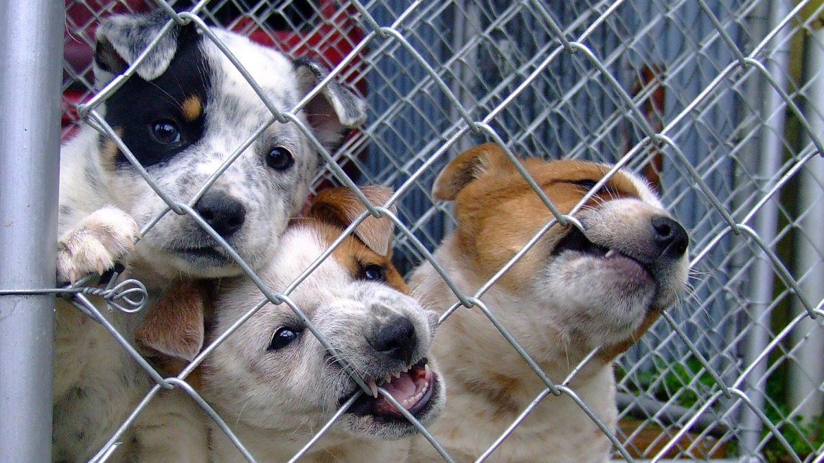 shelter dog kiss dog training