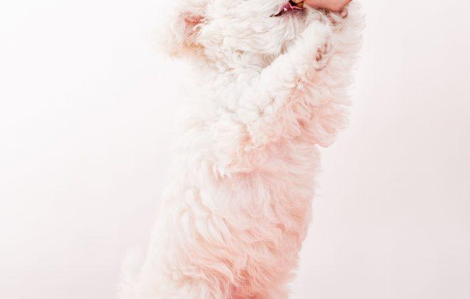 hand feeding kiss dog training