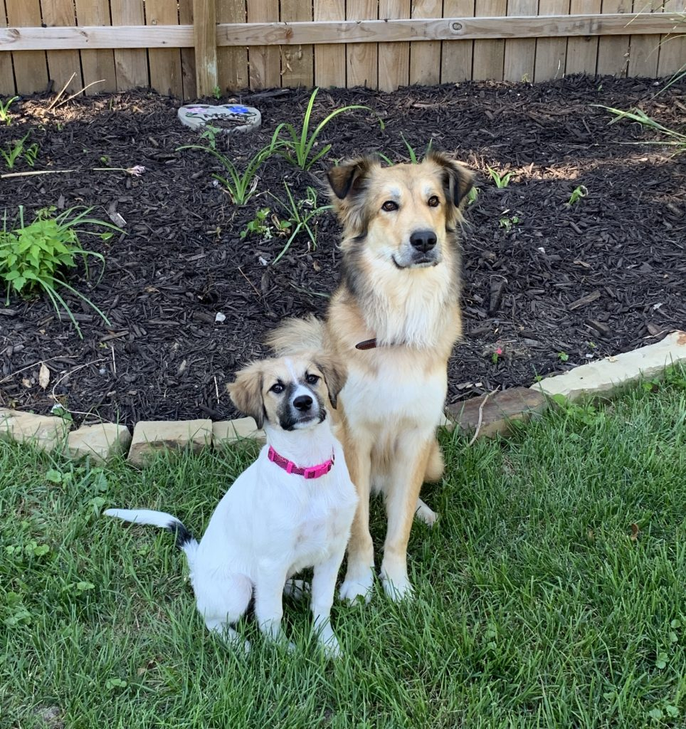Luna and Luka