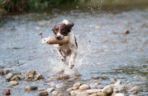 Dog Running Creek Kiss Dog Training