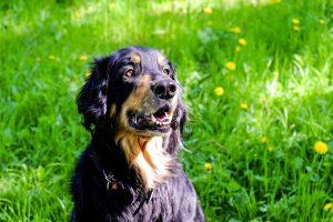 Pretty Dog Kiss Dog Training