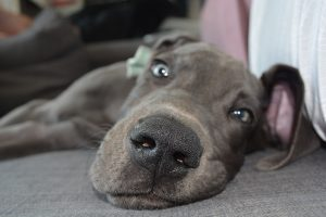Goofy puppy Kiss Dog Training