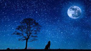 Dog Howling at the Moon Kiss Dog Training