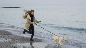 Dog on leash Kiss Dog Training