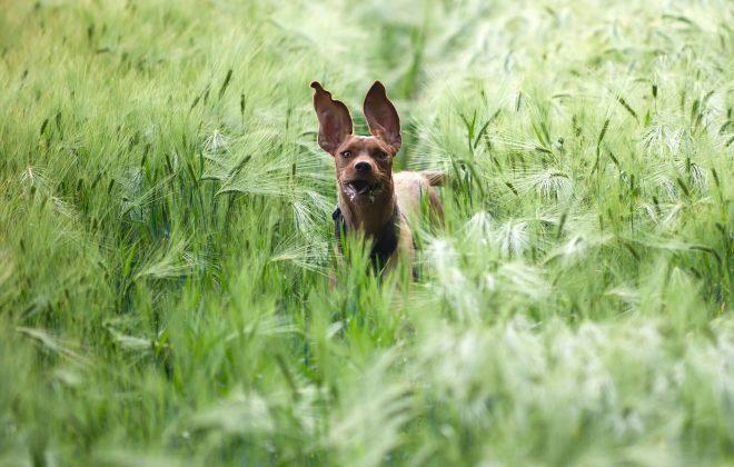 Crazy Dog Kiss Dog Training