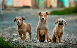 Puppies Kiss Dog Training