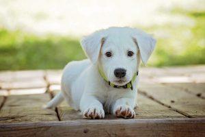 Cute Puppy KISS Dog Training