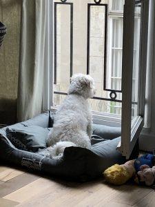Dog Window Kiss Dog Training