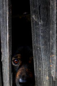 fearful dog - kiss dog training