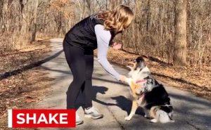 kiss dog training tricks